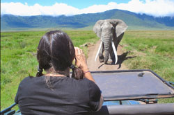 Young woman taking photo of African elephant in Ngorongoro Crater