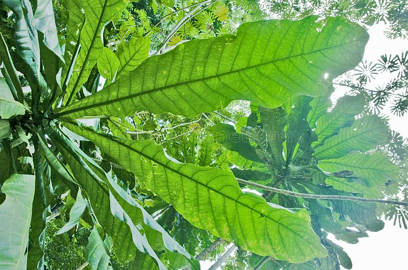 Looking through a raft of green leaves in the dense jungle canopy.