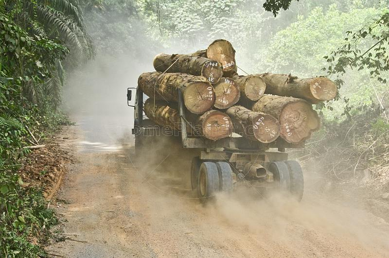 A logging truck loaded with tropical hard woods drives along a dusty jungle road.