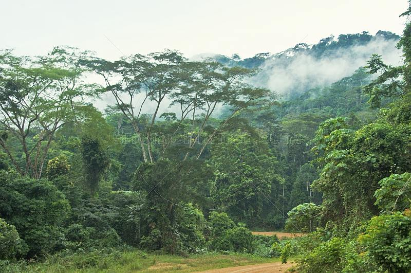 ... Cloud hugs the jungle canopy and sinks into the African rain forest. & Royalty Free Stock Photograph : Cloud hugs the jungle canopy and ...
