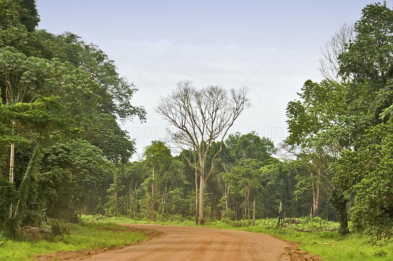 A red dirt logging road runs through dense forest and jungle.