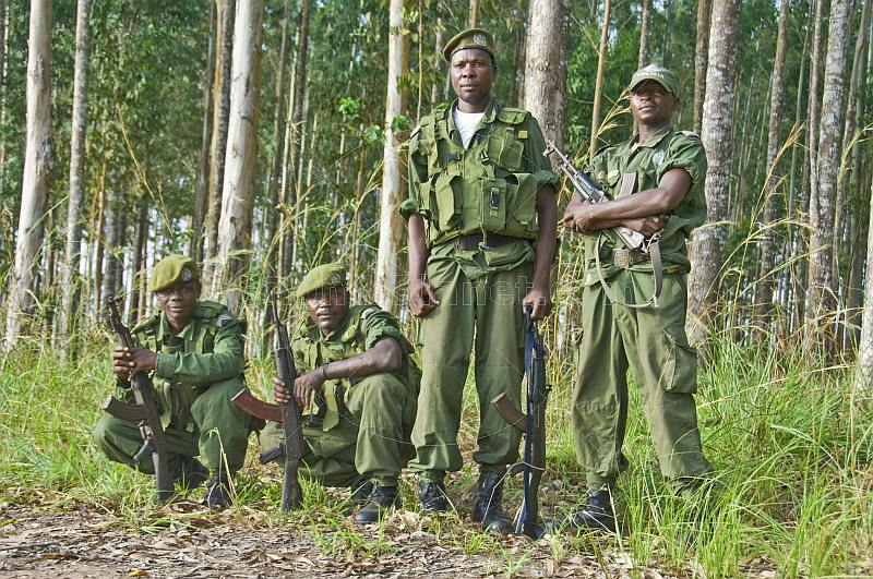 A squad of Angolan soldiers with assault rifles in eucalyptus plantation.
