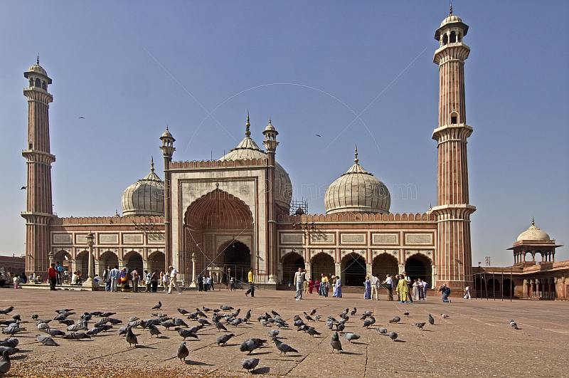 Pigeons feeding in the courtyard of the Jama Masjid built by Shah Jahan in 1644.