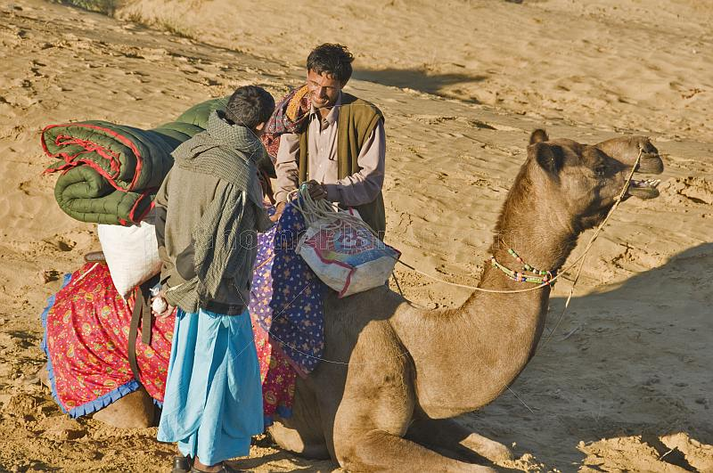 Two camel drivers chat as they prepare a camel for the days ride.