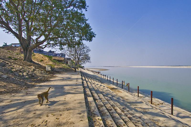 A monkey walks along deserted bathing ghats on the Saryu River.