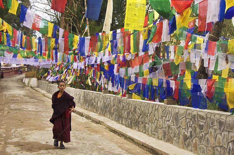 Young trainee Buddhist monk walks past colorful prayer flags.