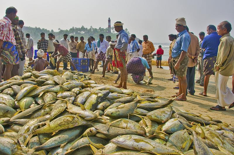 Fishermen sort their catch on the beach.