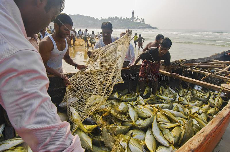 Fishermen use their boat as a temporary store for their fish.