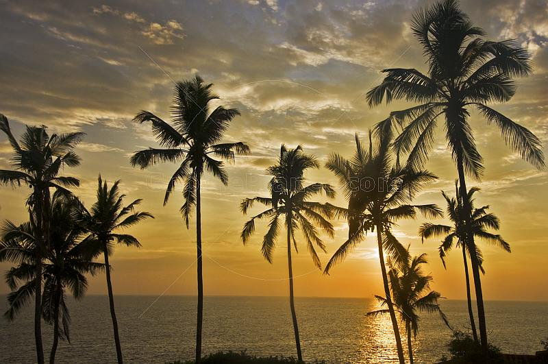 Sunset behind coconut palm trees over the Arabian Sea.
