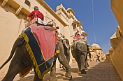 Elephants walk up the ramp to the Amber Fort and the Amber Palace.