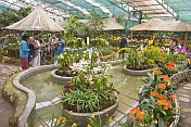 visitors consult the programme for the annual Flower and Orchid Show.