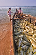 Two fishermen with their boat full of fish.