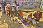 Cow With Extra Leg Is Honored By Village Woman at Kumbh Mela