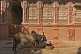 A Brahminy bull waits patiently for its breakfast in an alley of Bikaner's old quarter.