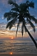Image of Coconut palm tree and waves at sunset.