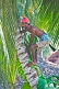 Indian man in lunghi climbs a coconut palm tree.