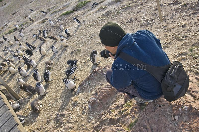 Photographing penguins at the Penguin Colony on the Bahia Camarones.