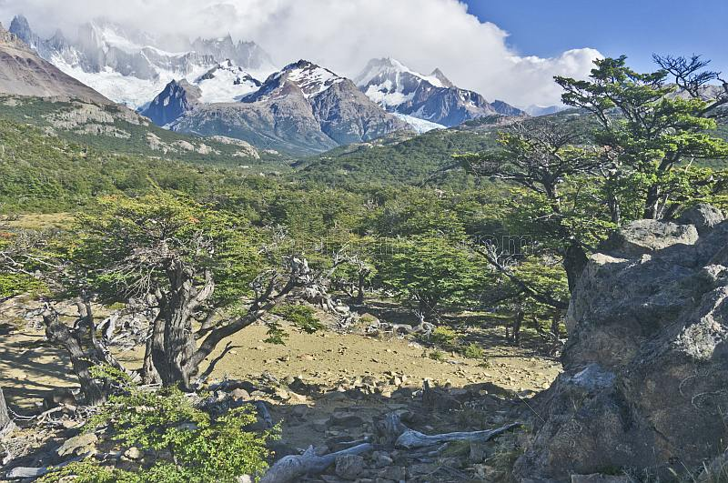 Forest and mountains in the Parque Nacional Los Glaciares.