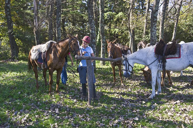 Riding instructor with horses in forest at the Estancia Los Potreros.