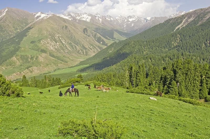 A Kyrgyz horseman waits with his farmer friend as his cattle crop the grass of the Altyn Arashan Mountains.