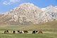 Horses grazing the sparce grass of the At-Bashy Range, on the road to the Torugart Pass to China.