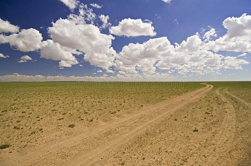 Sparce vegetation of the Gobi Desert, with tyre tracks, and clouds.