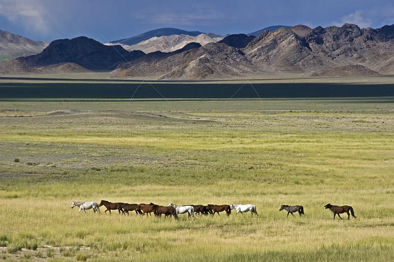 Horses grazing near a lake.