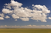 Sparce vegetation of the Gobi Desert, dominated by clouds in a big blue sky.