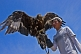 Mongolian bird-handler with Eagle