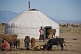 Yurt encampment on the mongolian plains, with woman milking a cow.