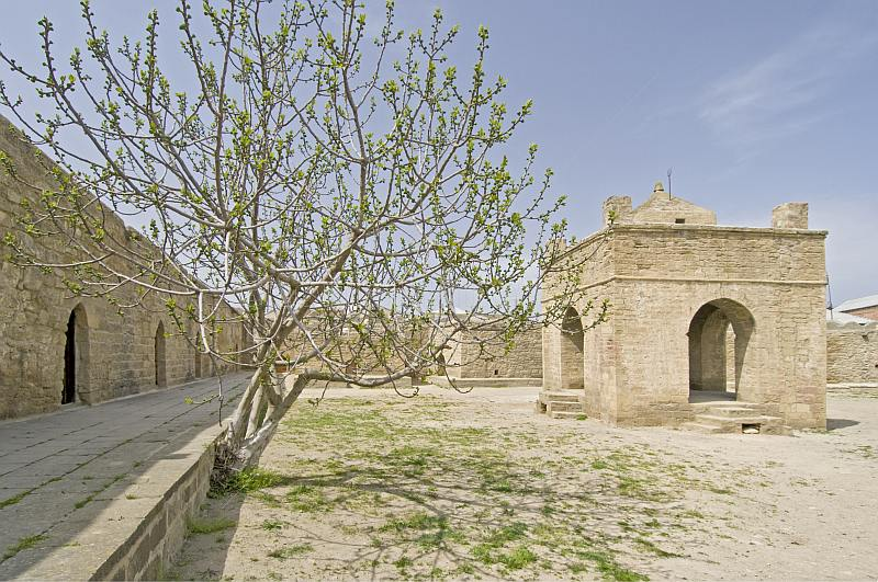 Fig tree in the central compound of the Atesgah Fire Temple.