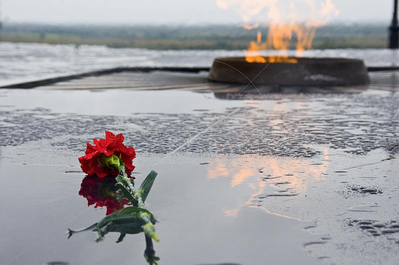 Red carnation flower in the rain, a memorial by the side of the Eternal Flame, lit to honor the Great Patriotic War of 1939-1945.