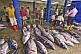Yellowfin Tuna wait to be shipped - 02