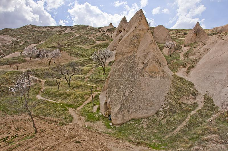 Group of tuft cave dwellings next to trees in blossom, near Goreme.