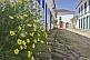 Image of Plants grow outside colorful colonial house on empty cobbled street.