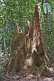 Three-pointed termite mound in the jungle.