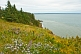 Flower and tree covered cliffs lead down to the Bay of Fundy in the Cape Split Provincial Park Reserve.