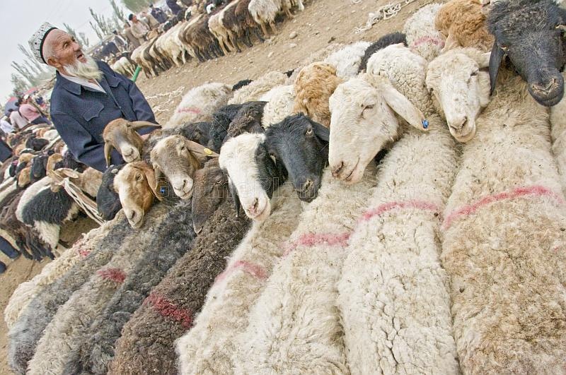 Elderly Uighur man with fat-tailed sheep tethered at the Sunday Market.