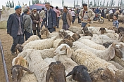 Traders discuss the price of sheep at the Sunday Market.