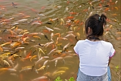 Girl watching a shoal of Goldfish at the Bishu Shanzhuang summer resort for Qing Emperors.