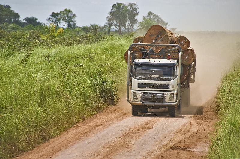 A logging truck loaded with tropical hardwood logs drives along a dusty jungle road.