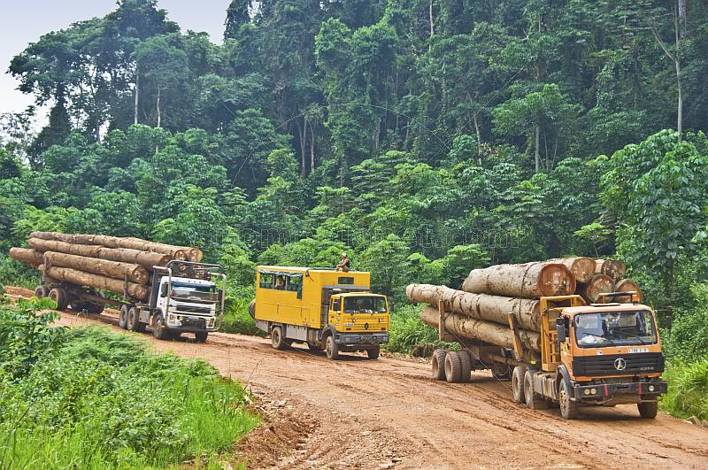 Oasis Overland truck waits between 2 timber trucks on a logging road through dense jungle.