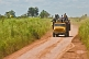 An old yellow truck with passengers riding on the back drives down a dusty jungle road.