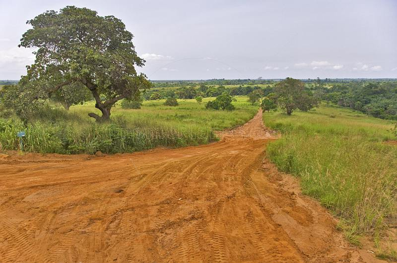 A graded sandy road runs through forested savannah grassland.