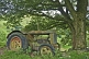 Abandoned Fordson tractor in field under a sycamore tree.